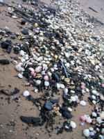 spazzatura+spiaggia