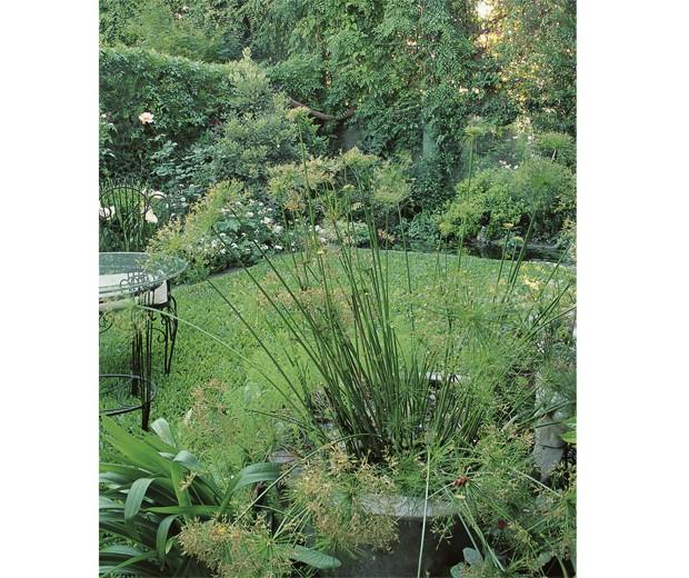 fotos de jardins urbanos : fotos de jardins urbanos:Papiros enanos dentro de la tinaja de agua. En el fondo, el estanque